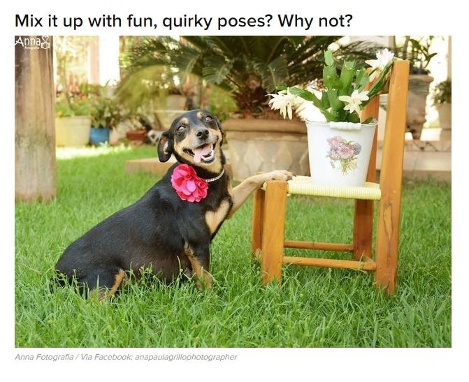 Dog Maternity Photo session