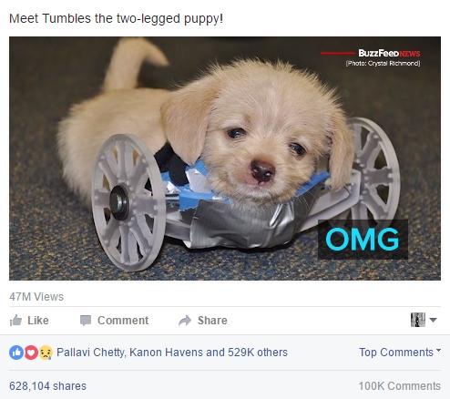 Two-legged puppy
