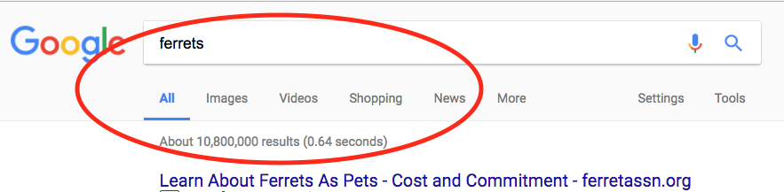 10 million posts about ferrets